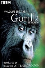 Gorilla Revisited with David Attenborough