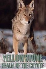 Yellowstone Realm of the Coyote